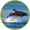 Acuicultura y delfines