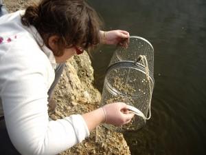 Una voluntaria observa la captura de fartets. /ANSE