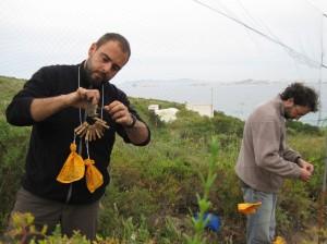 Dos anilladores voluntarios extraen aves de una red.