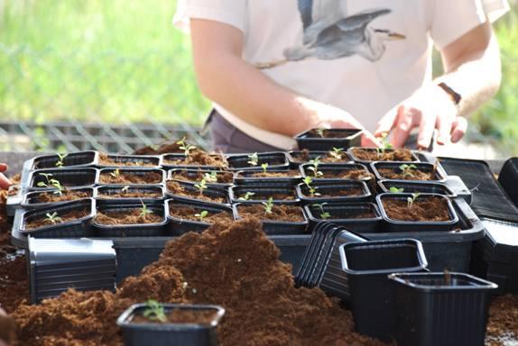 Producci n de planta en el vivero anse asociaci n de for Viveros del sureste