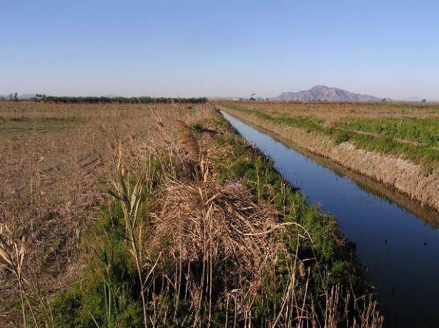 Proyecto Humedal de los Carrizales