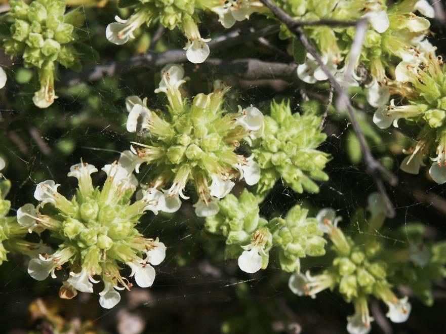 Anse cede plantas para el jard n bot nico de murcia anse for Jardin botanico numero telefonico