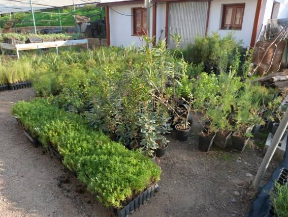 Plantas aut ctonas ocupan los jardines de la ciudad de for Viveros del sureste
