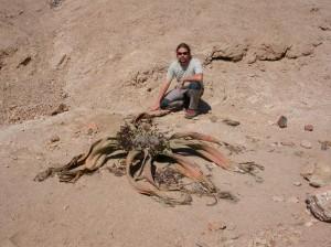 Welwitschia_Jorge