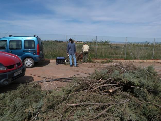 Sustitución de cipreses de Arizona por flora autóctona