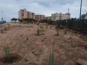 estado final de la parcela de arenal