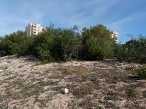 acacias en Monte Blanco