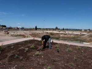 mantenimiento plantaciones