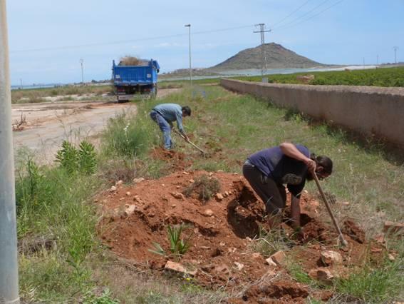 plantación seto