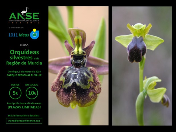 2014-03-09-ANSE-1011ideas-CURSO-Orquideas-silvestres-Region-Murcia