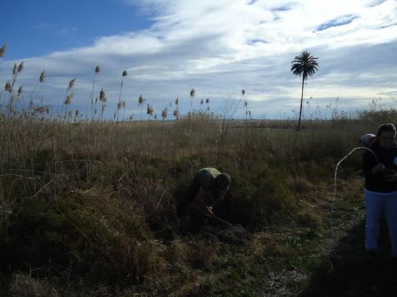 plantando álamos en Carrizales
