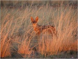 Namibia_Perro