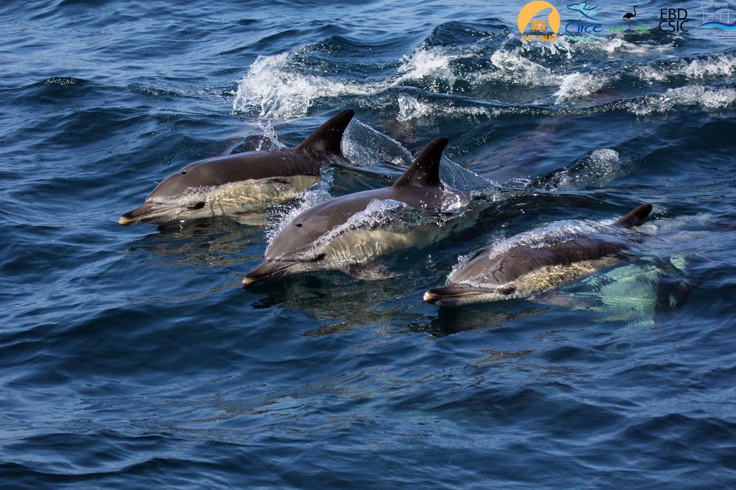 delfines_comunes_resize