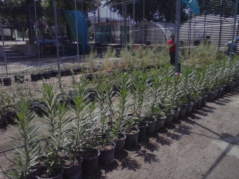 Nueva generaci n de rboles y arbustos de ribera para el for Viveros en murcia
