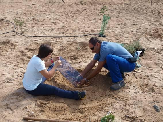 Plantando en los arenales