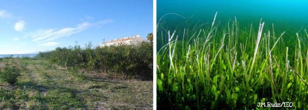 En las zonas sumergidas, la Caulerpa prolifera ha ocupado distintas zonas de fondos de la laguna, mientras que en los arenales, especies alóctonas como las acacias, la uña de gato o las pitas, procedentes en muchos casos de la jardinería, sustituyen a las especies autóctonas.