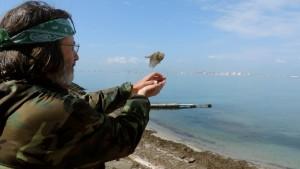 Un voluntario libera una de las aves anilladas