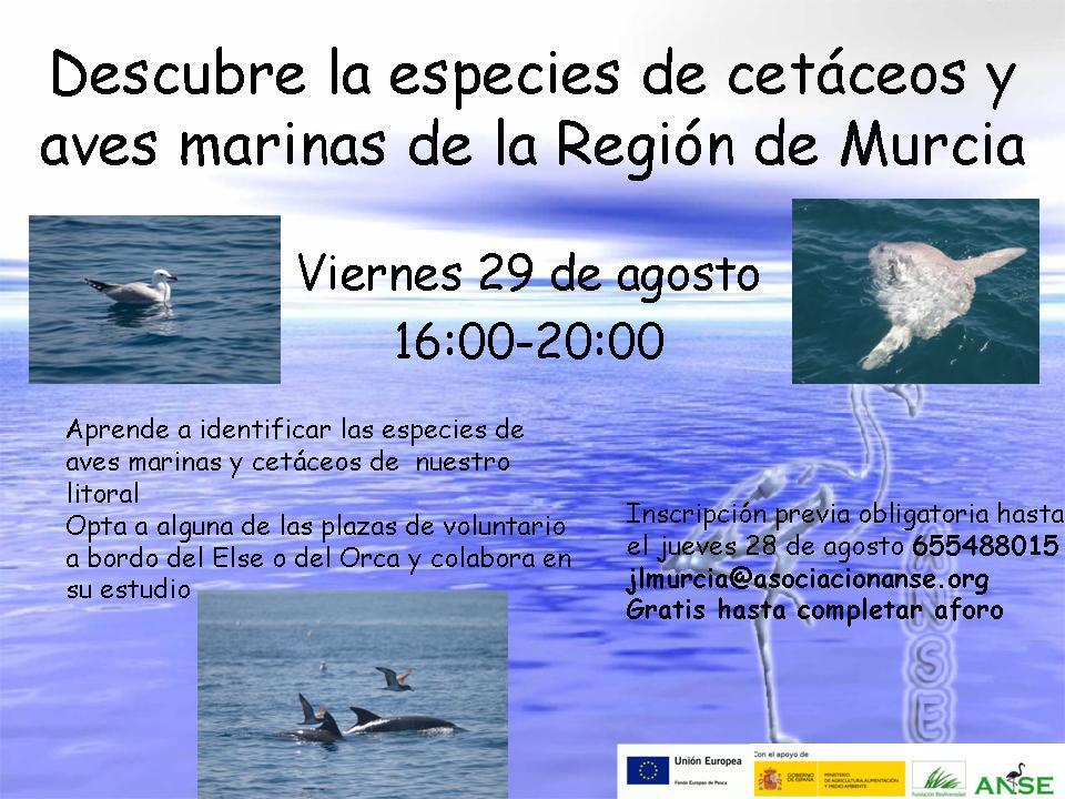 Descubre la especies de cetáceos y aves marinas.3.2