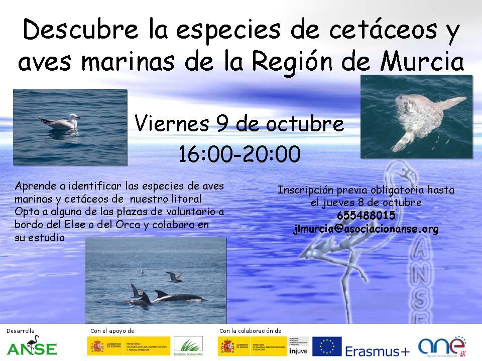 Descubre la especies de cetáceos y aves marinas.4