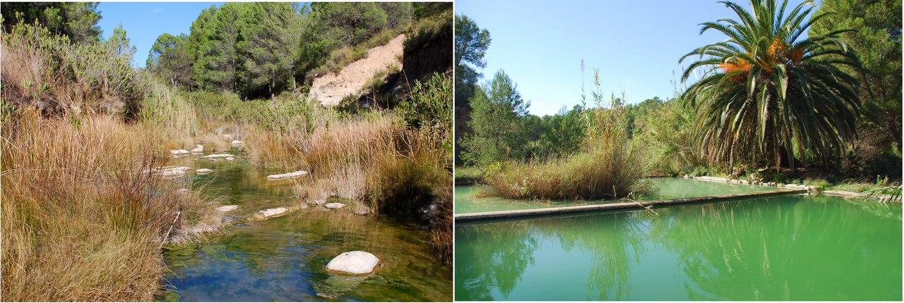 Mientras que ciertas especies suelen seleccionar aguas corrientes, otras prefieren aguas estancadas