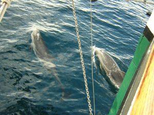 DelfinesAlejandro