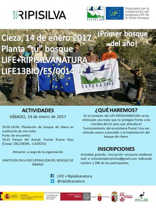 14_en_2017_plantacion_ripisilva