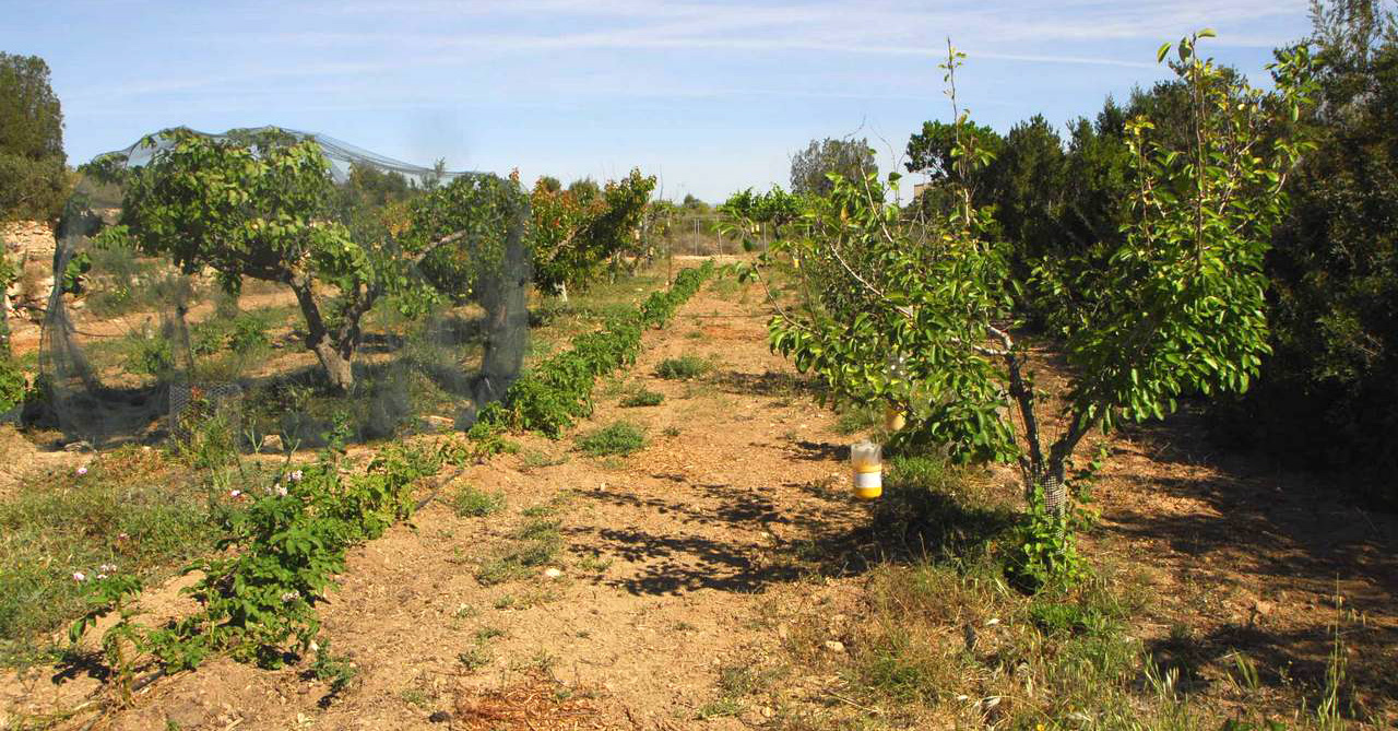 Agricultura Frutales red