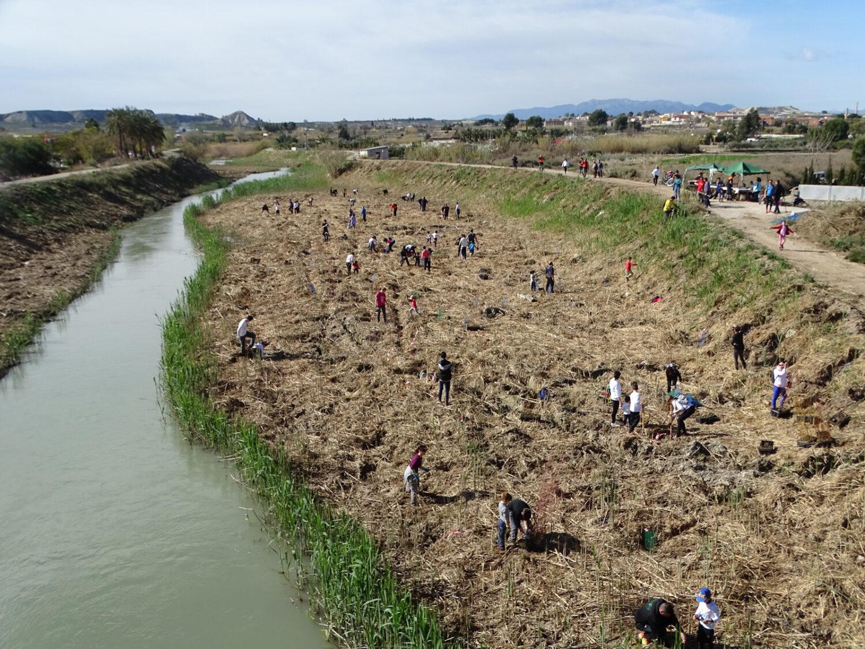 Recuperación del río Segura en Ceutí, estableciendo un bosque de ribera
