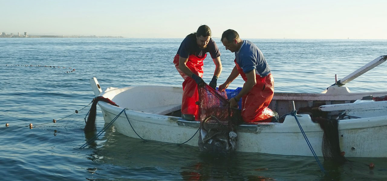 Pesca Anguila