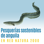 Pesquerías sostenibles anguilas