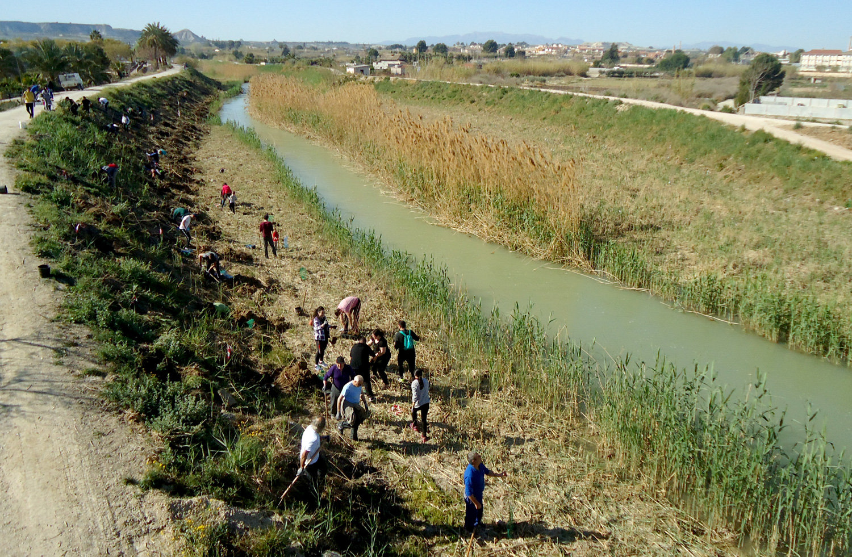 Plantación bosque de ribera en Lorquí