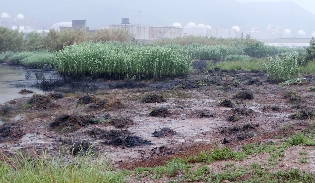 vegetación con hidrocarburos