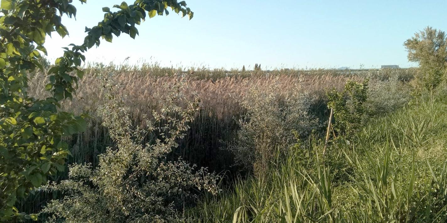 Inicio de bosque de ribera plantado por ANSE y Aguas de Murcia