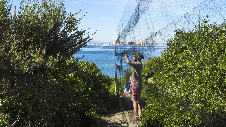 Anillador en Isla Grosa