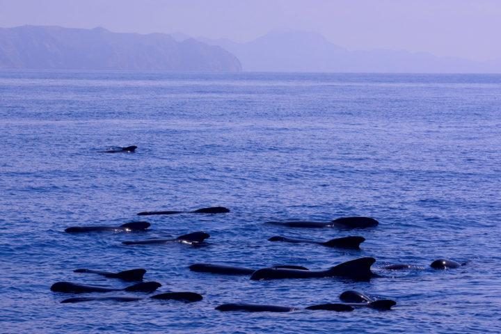 Calderones Cabo Tiñoso